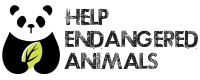 Help Endangered Animals and Contribute To Wildlife Conservation